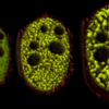 液滴是细胞动态活动的关键