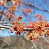 研究发现城市蜜蜂重要的开花植物