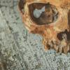 骨蛋白质组学可以揭示尸体在水下已经存在了多长时间