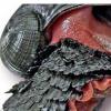 研究人员揭示了鳞脚蜗牛的基因组秘密