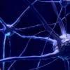 分子转换在学习负面经验中起着至关重要的作用