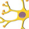 科学家在患有脊髓损伤和视神经损伤的小鼠中再生神经元