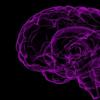 睡眠时人脑重播我们清醒经历的证据