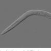 蠕虫释放细菌防御系统