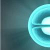 小染色体如何与大染色体竞争以吸引细胞的注意力