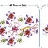 分子减少与阿尔茨海默氏病有关的多种病理