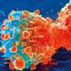 杀死睡眠细胞可能会增强乳腺癌治疗