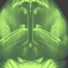 整个小鼠大脑的新高分辨率3D地图