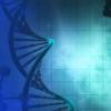 消除受损的种系细胞可保持种系完整性