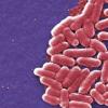 微生物中的工程自然选择对生物燃料生产具有影响