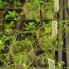 生物学家揭示了养分供应与生长之间的分子联系