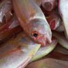 健康的肠道微生物群会影响养殖鱼类