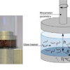 使用污泥蠕虫作为粘度测试中活性细丝的模型