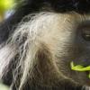 研究表明 甚至动物也可以从社交距离中受益以预防疾病