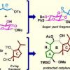 早稻田大学的科学家成功地开发了一种全合成辅酶A的方法