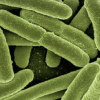 微生物组疗法可预防复发性细菌性阴道病