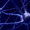 研究人员开发出微动大脑的新方法