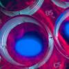 干细胞突变的新研究可以改善再生医学