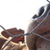 通过像捕食者一样思考来拯救牲畜