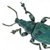 使用X射线跟踪昆虫的结构色演变