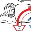 匹兹堡大学脑研究所的神经科学家追踪了将大脑连接到胃的神经通路