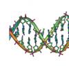 基因组研究将DNA变化与特定乳腺癌亚型的风险联系起来