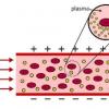 工程师使用机械阻力来检测对红细胞的损害