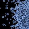 科学家使用DNA截获工具改变先天免疫细胞的基因