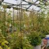 快速 确地检查花生植物健康性状的方法