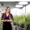 遗传发现揭示了大麦作物中的钠积累