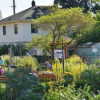 生物多样化的城市绿色空间可增强人体免疫系统