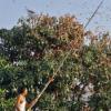 印度无人机追赶蝗虫 因为成群的农作物摧毁了成千上万的农作物