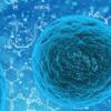 细菌 真菌和植物有时会产生可结合金属的物质
