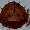 研究表明 臭氧层的侵蚀导致了生物大灭