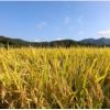 作物数据中的模式揭示了有关植物及其环境的新见解