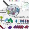 绘制脑肿瘤中的免疫细胞图