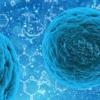 研究解决了围绕肿瘤抑制基因在多能ESC中的作用的争议