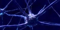 不同步的脑电波可能是与精神分裂症有关的学习不足的原因