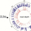 研究人员改进了将基因组与环境单细胞功能联系起来的方法