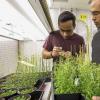 随着植物的生长 它将细胞材料从其制造场所的版本转移到细胞壁构建区