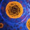 端粒酶是与衰老和癌症有关的必需酶