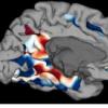 新研究揭示了识别和识别发生的大脑区域