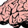 编程语言 脑部扫描显示编码使用与语音相同的区域