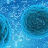 科学家设计一种蛋白质来对抗癌症和再生神经元