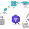 研究人员揭示了分子伴侣Raf1辅助RuBisCO组装的分子基础