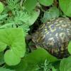 研究跟踪了非木本植物数十年生命周期的变化