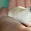 研究人员发现雷特综合征的潜在治疗方法