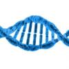团队开发用于精密医学的在线人体免疫组图谱