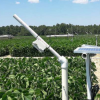 低成本相机可能是用于远程监测农作物压力的传感器
