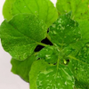 新的植物基因编辑方法提高了速度可扩展性和遗传力